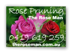 The Rose Man - Canberra